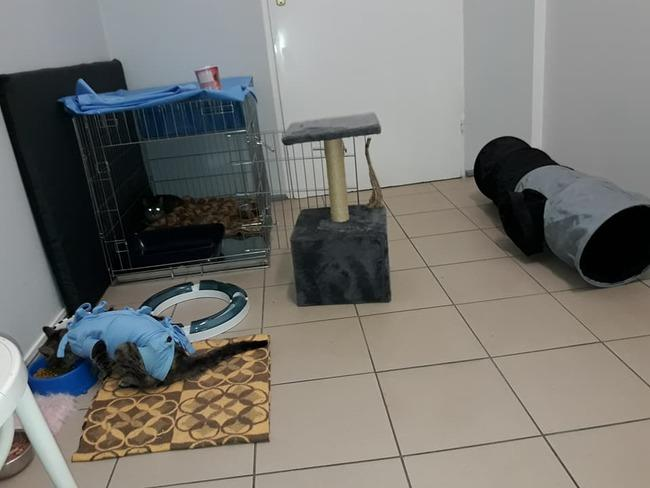 Zdjęcie główne #966 - Lola i Lolek mają wspólny domek