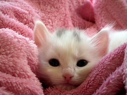 Zdjęcie główne #976 - Ile kosztuje przygotowanie bezdomnego kota do adopcji? Te kwoty Cię zaskoczą!